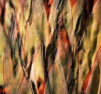12 Yucca.jpg
