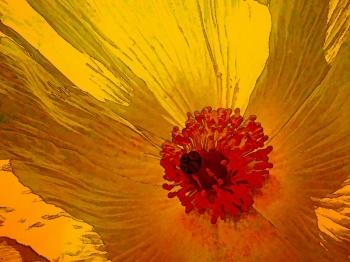 14 Poppy.jpg