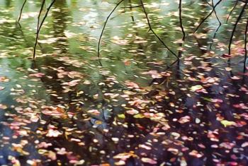 Monet Pond.jpg