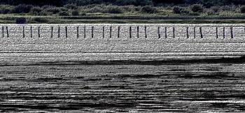 Rotting Pilings     Whidbey Island.jpg
