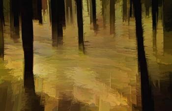 Light on the Forest Floor.jpg